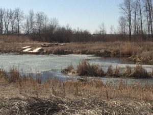 Rivers Wetlands Project